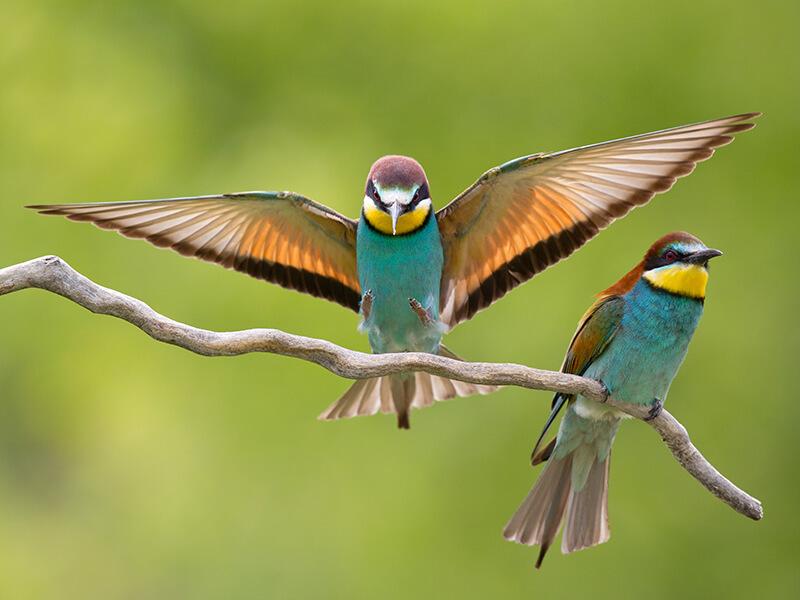 Birds Algarve